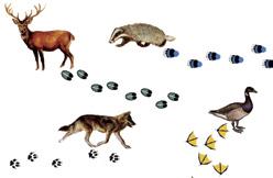 Animali e impronte