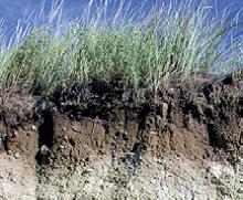 terra piante